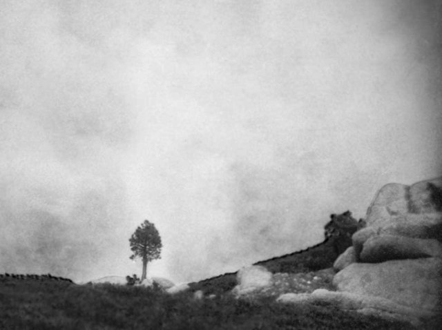 Tree, rock, fog...