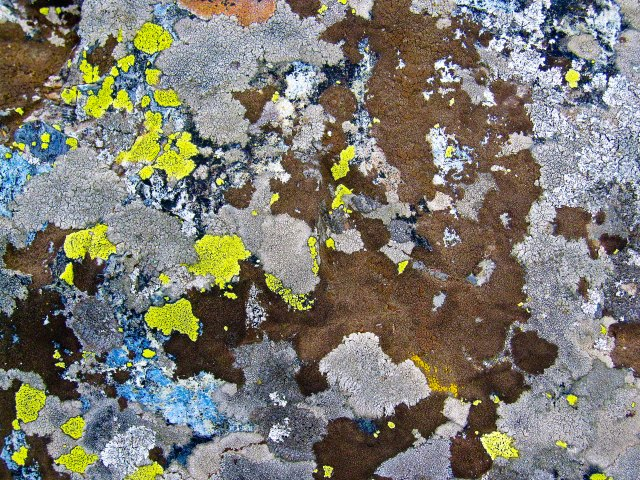 Lichen Abstract 1