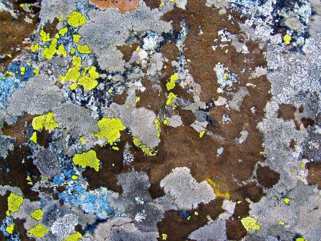 Lichen Abstract 1