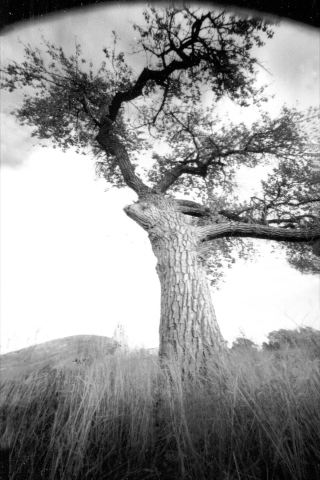 Cottonwood and grass pinhole