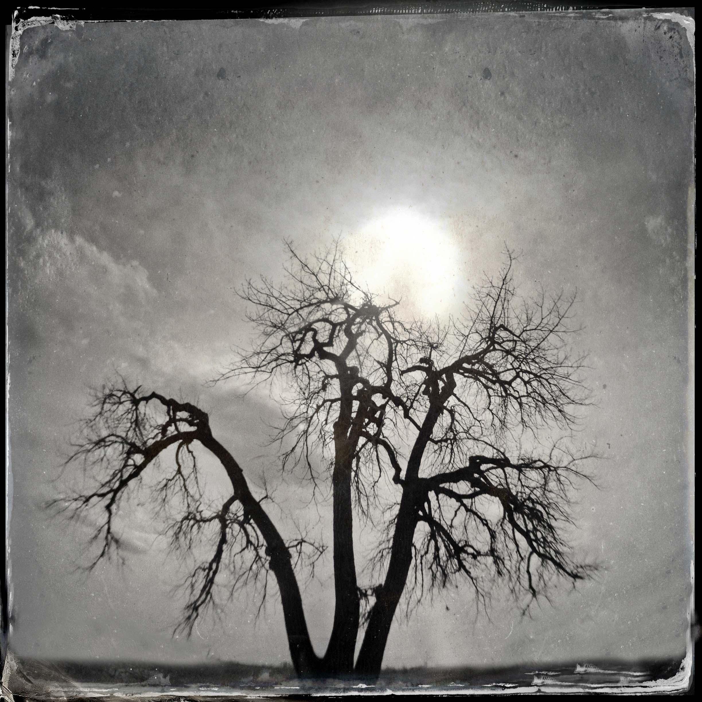 Cottonwood and Sun