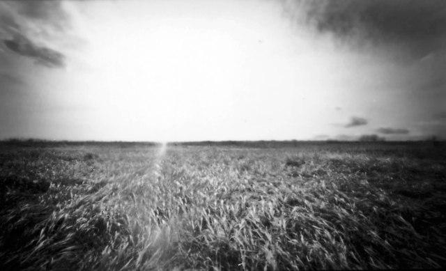 Grass sun and sky.