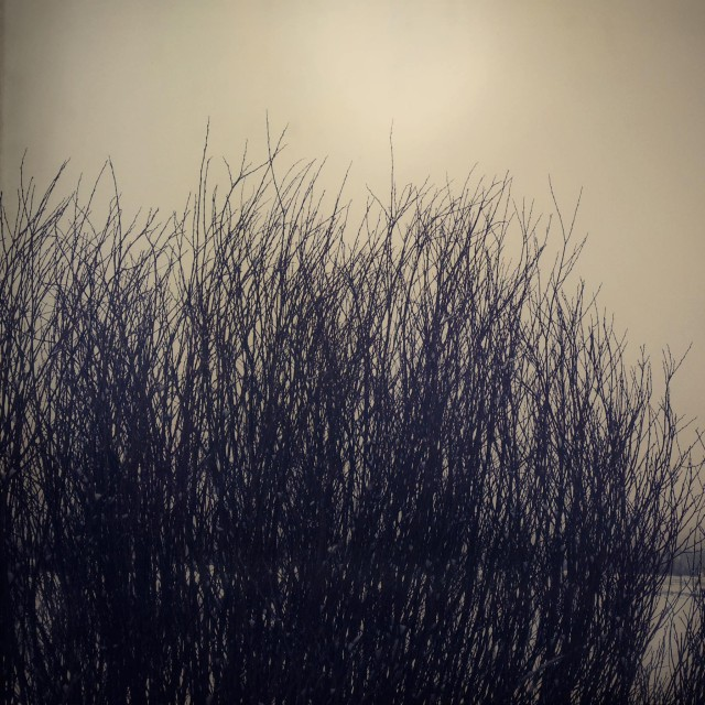 Winter Willows