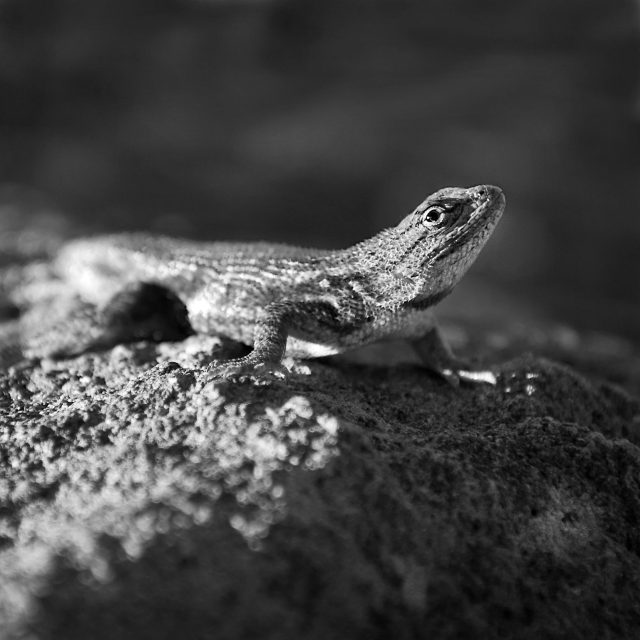 Lizard and Light