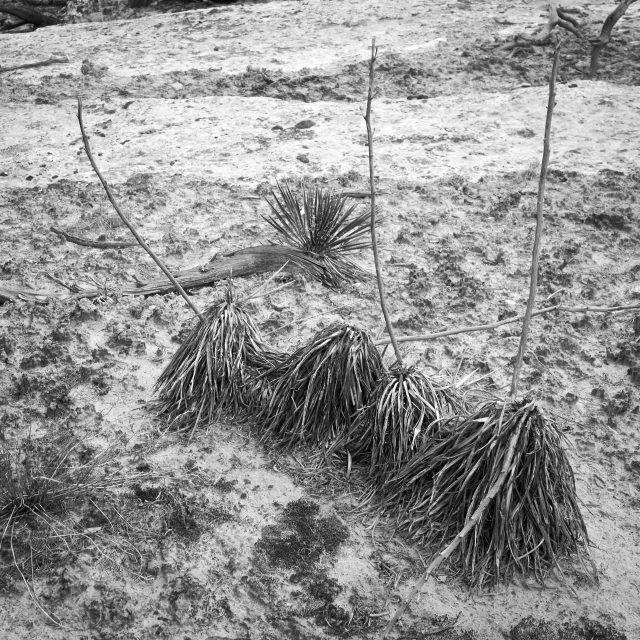 Four Brooms