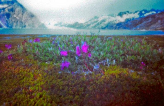 Greenland_pinhole_003