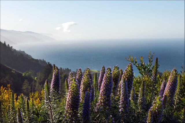 Lupines_sea_1