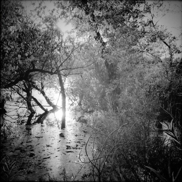 Pond_sunset_Pin