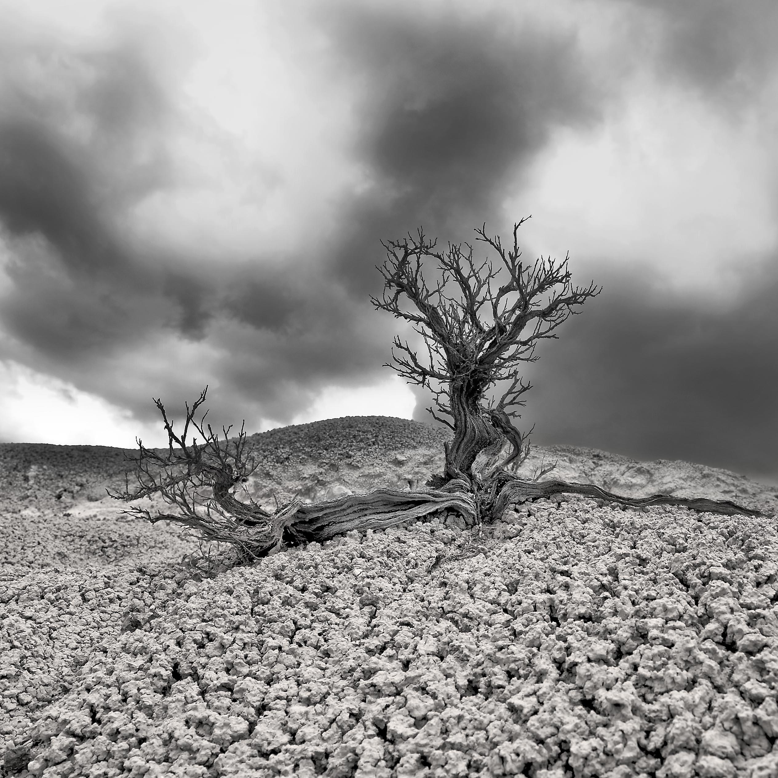 Tree_mud_hill