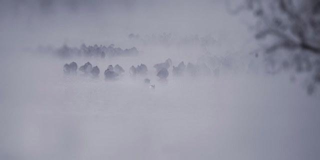 Geese_fog_1