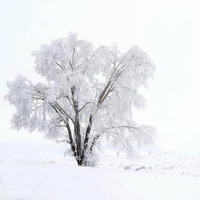 Frosty_morning_fog_1