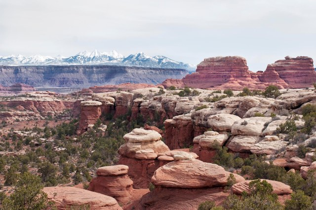 Canyonlands_la_sals