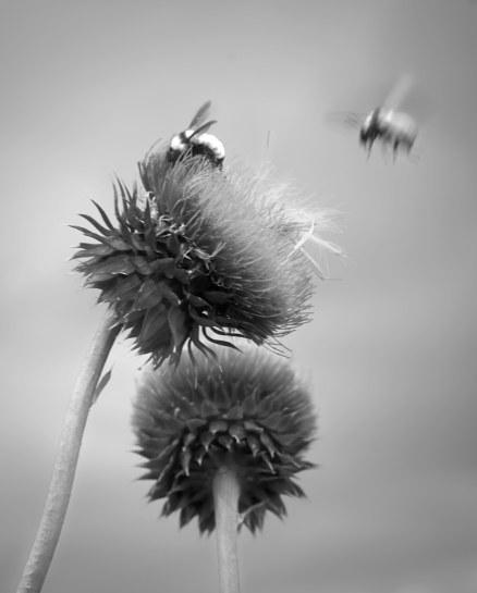 A_blur
