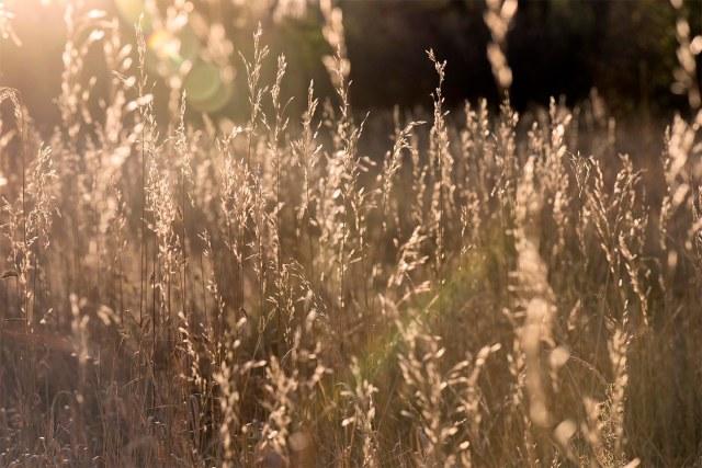Fall_grass_1