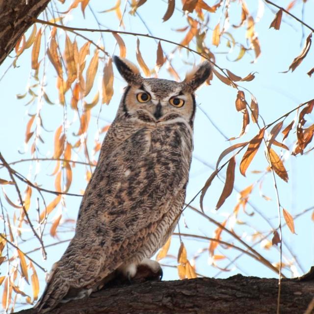 November_owl_1