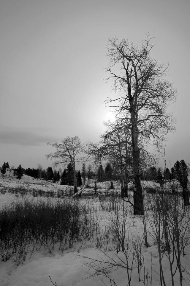 Last_winter