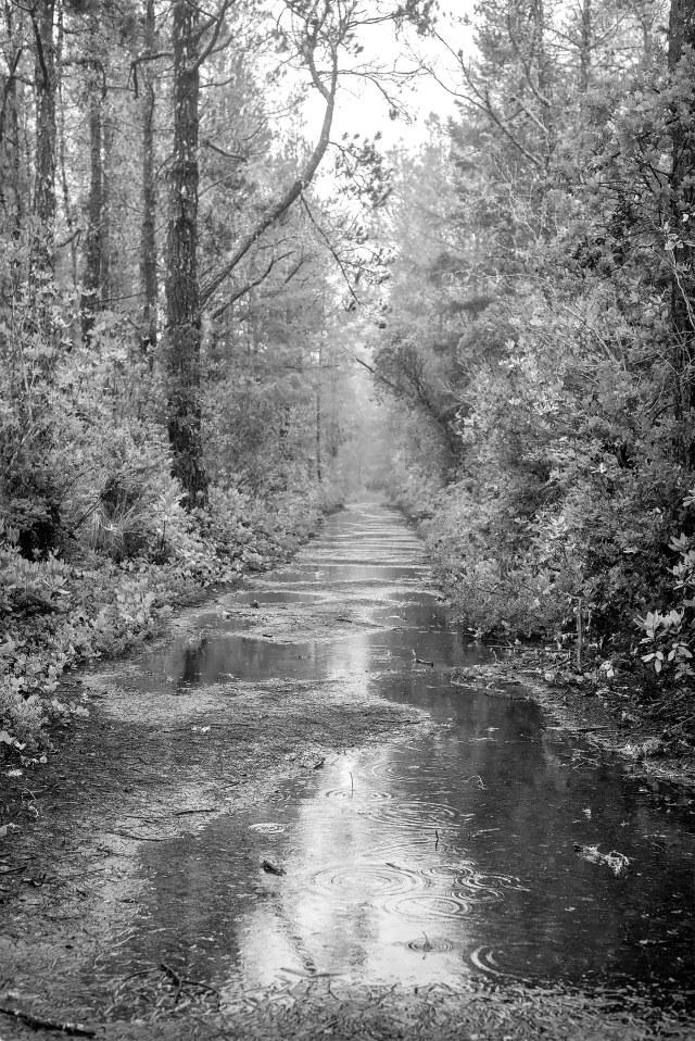 Walk_in_rain_bw
