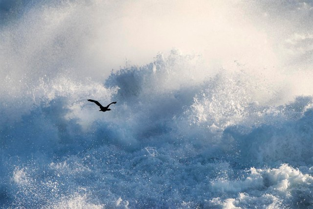 Cormorant_waves_2