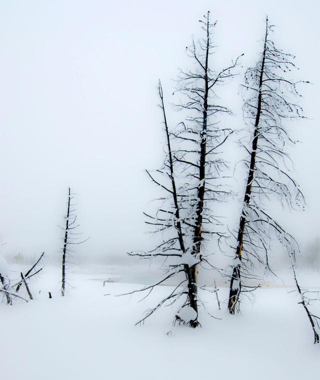 Soft_trees_1