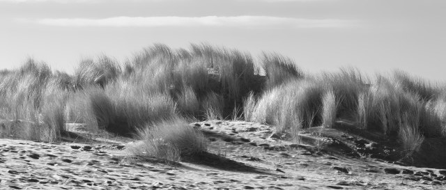 Winter_beach_bw