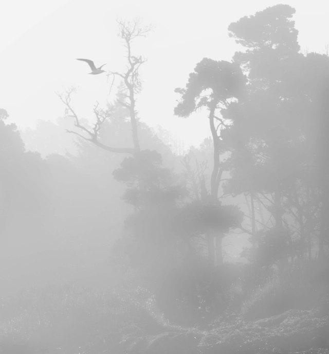 Fogg_or_steam