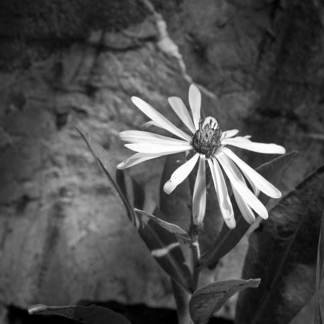 Flower_in_dark