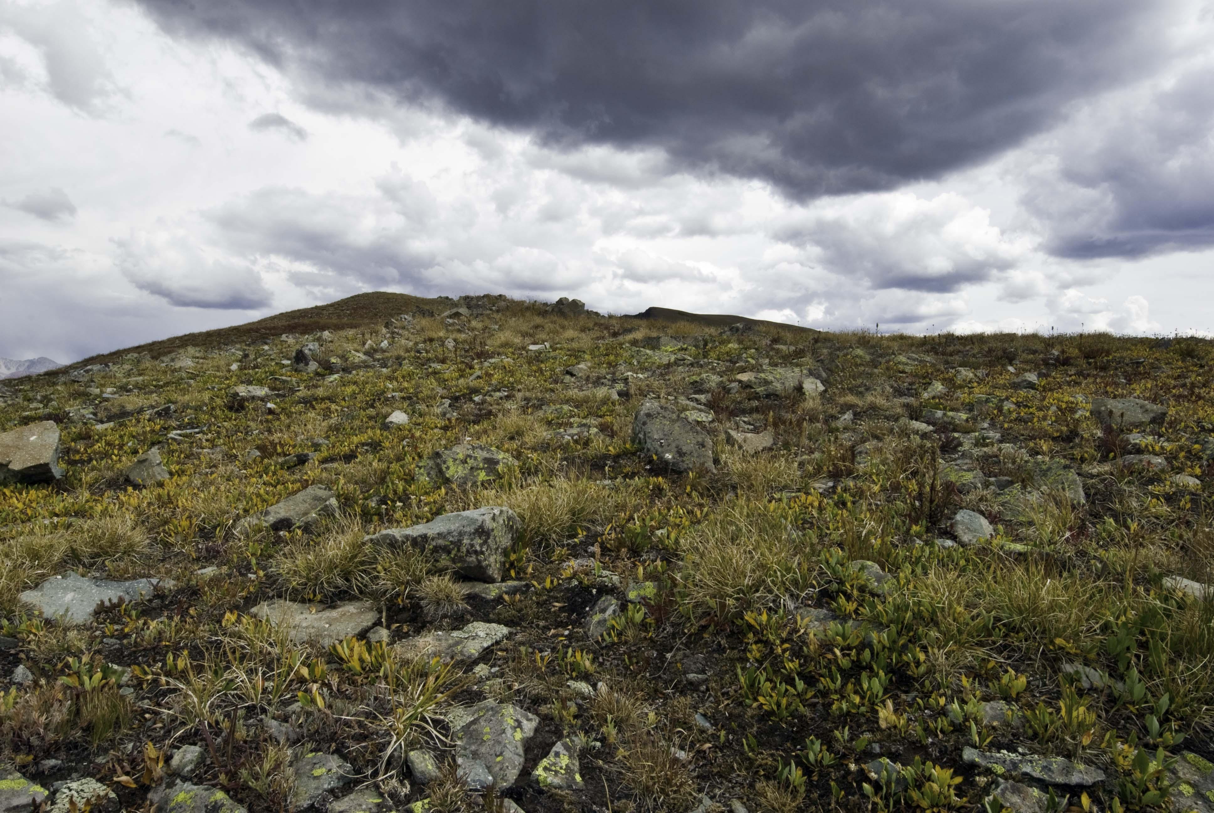 tundra_1