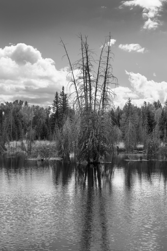 at_ponds_edge_1_bw