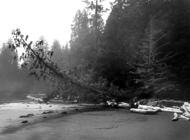 on_a_foggy_morning_bw