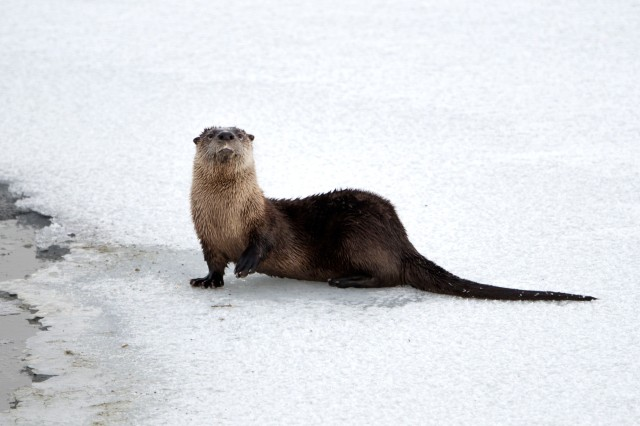 curious_otter