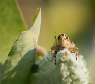 Grasshoppin_1
