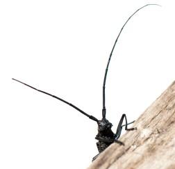 Beetle_mania_4