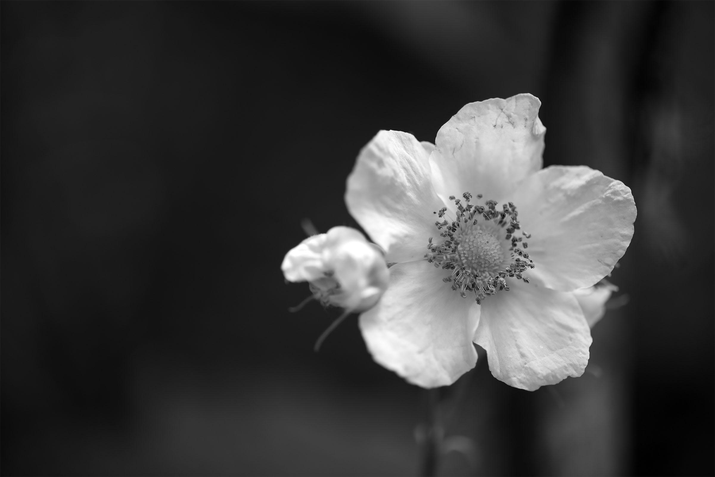 Wildflower Monochromes 2 Nature Has No Boss