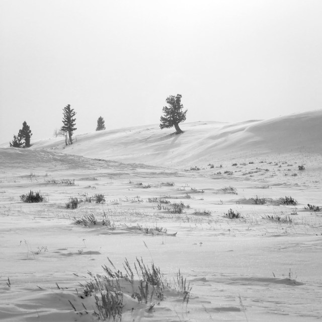 on_blacktail_plateau_bw_1