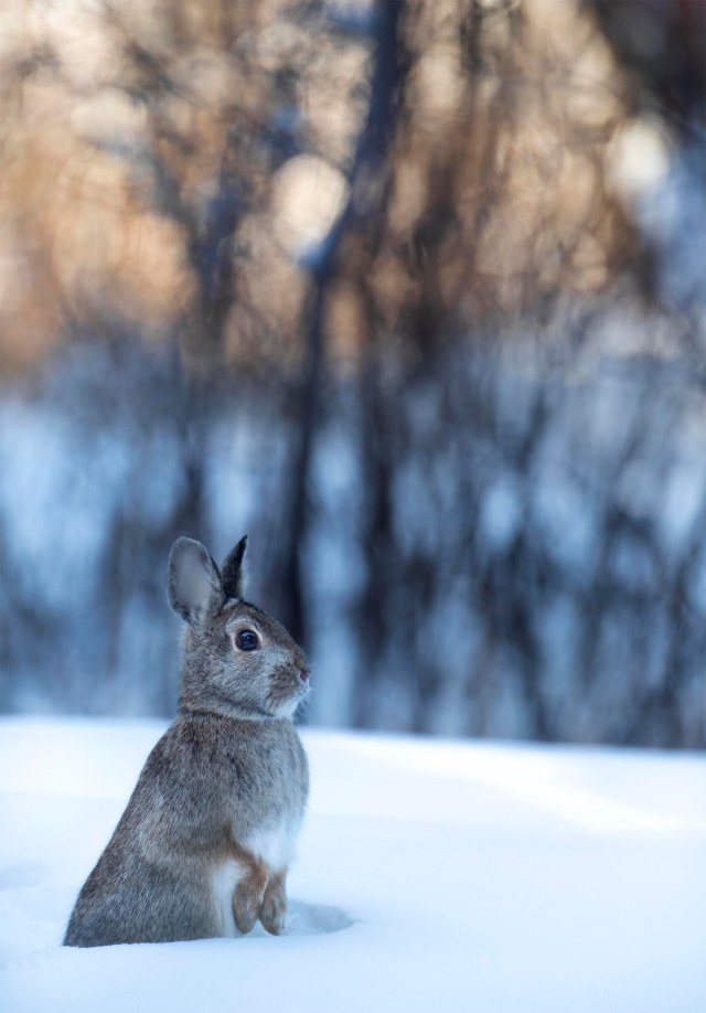 winter_bunn_221
