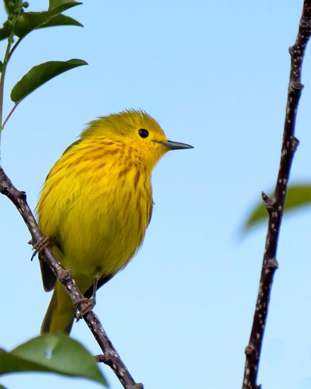 Yellow_0978
