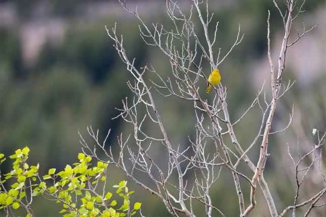 Yellow_1254