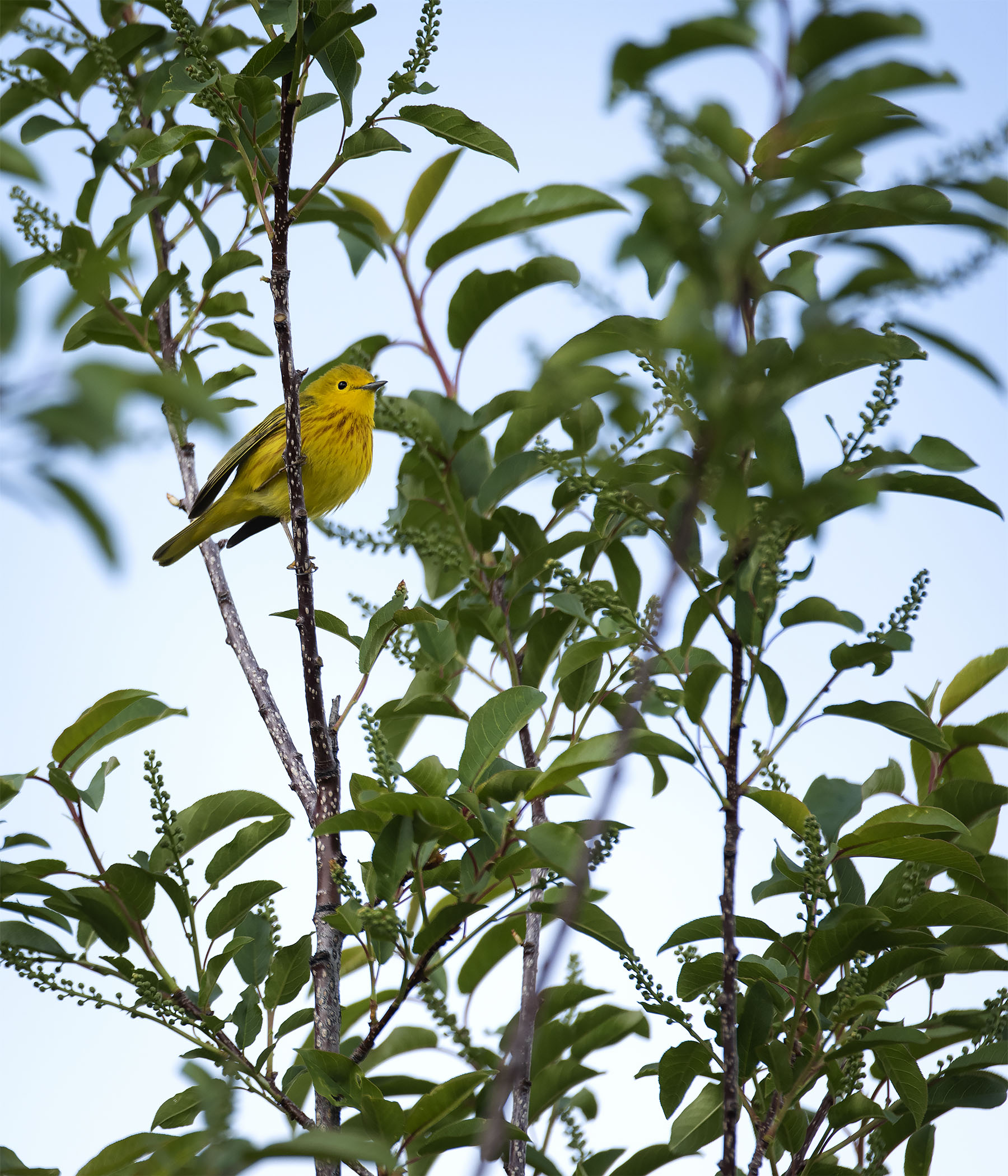 Yellow_3465