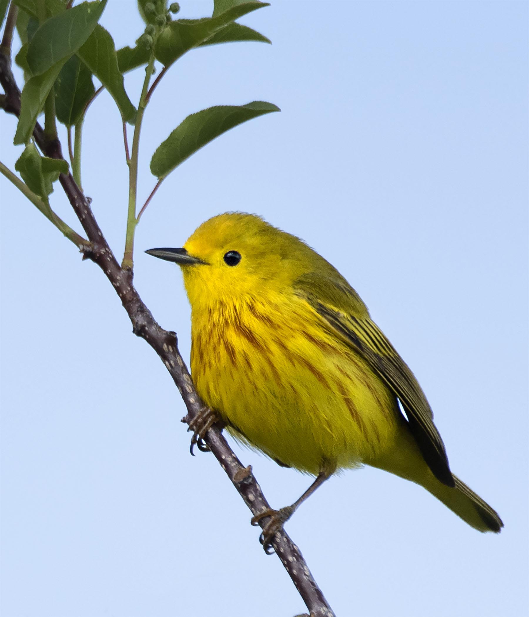 Yellow_7659