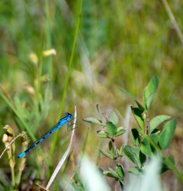 Blue_1546