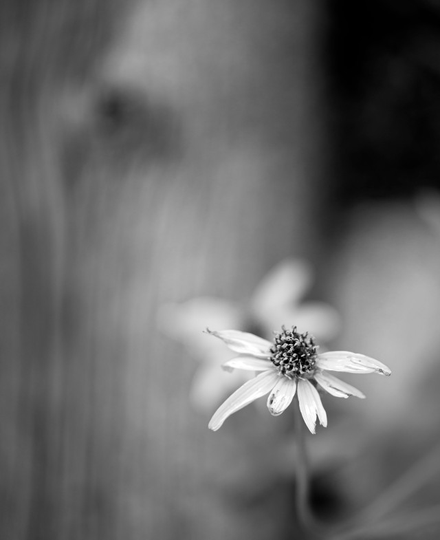 Seeking_solitude_234_bw