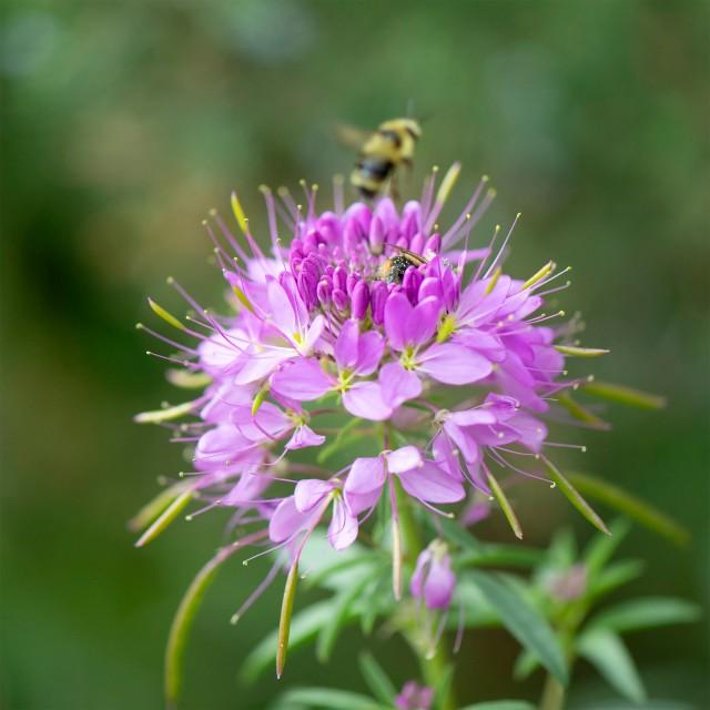 Bee_103
