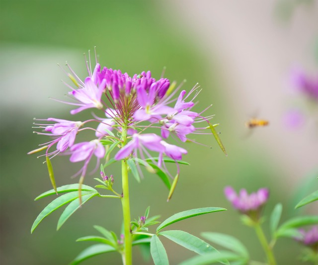 Bee_104
