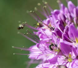 Bee_105