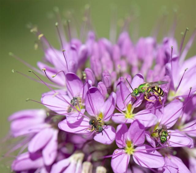 Bee_106