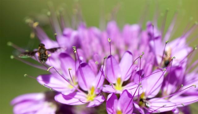 Bee_107