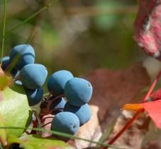 Fruits_4