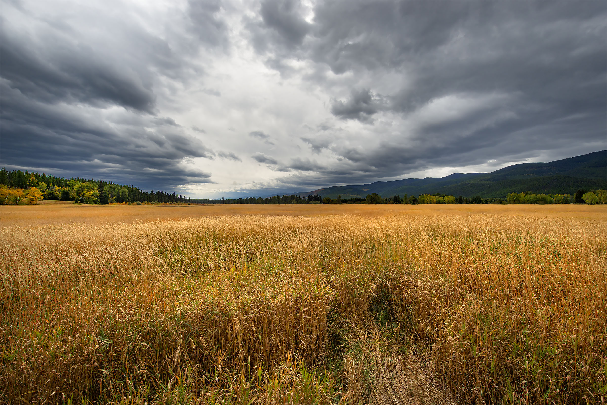 Grass_and_sky_1