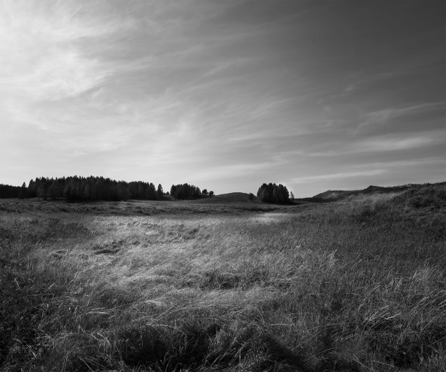 Fall_fields_bw_231