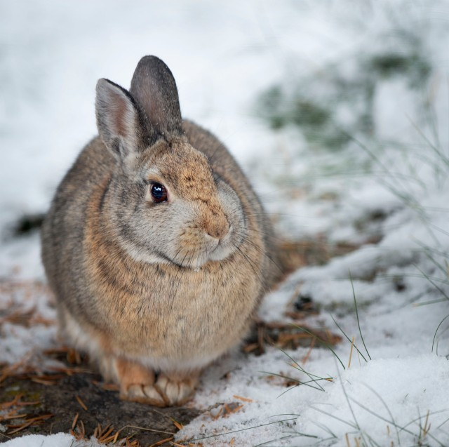 Winter_bunn_19_20